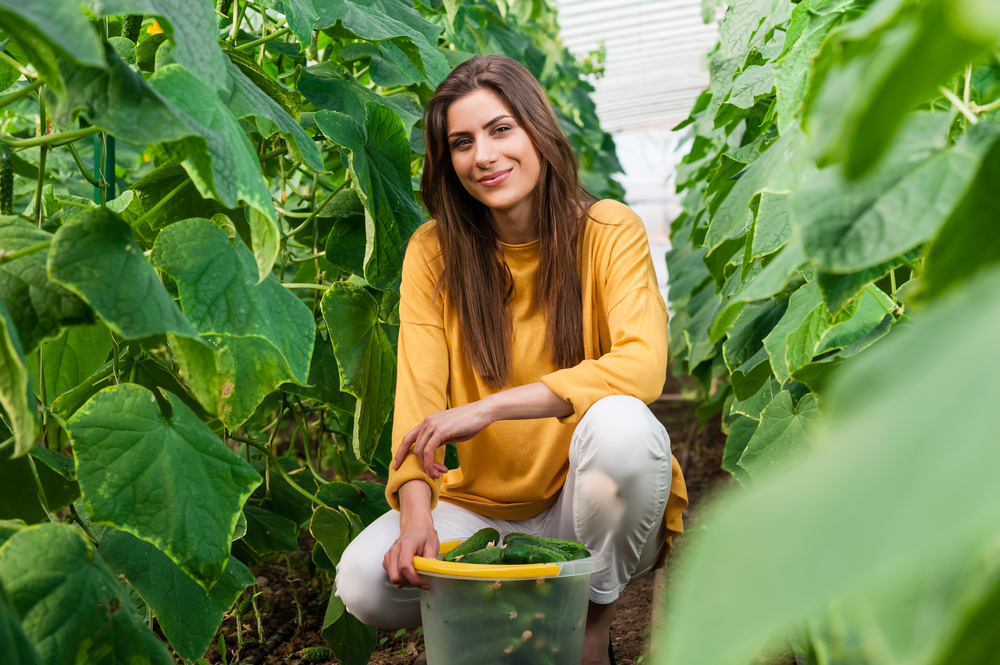 young woman in a harvesting cucumbers in a garden